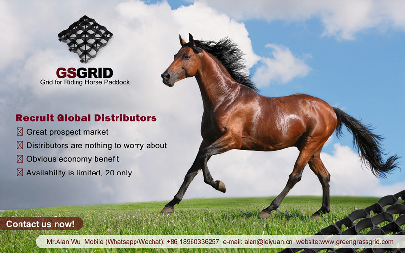 Horse Paddock Equestrian Flooring Grid Recruit Global Distributors